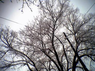 Winter Cameraphone